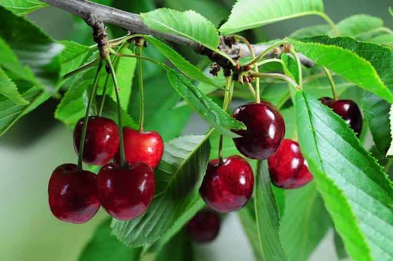abono-para-frutales