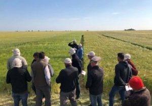 campo de demostración de variedades de cereal de invierno