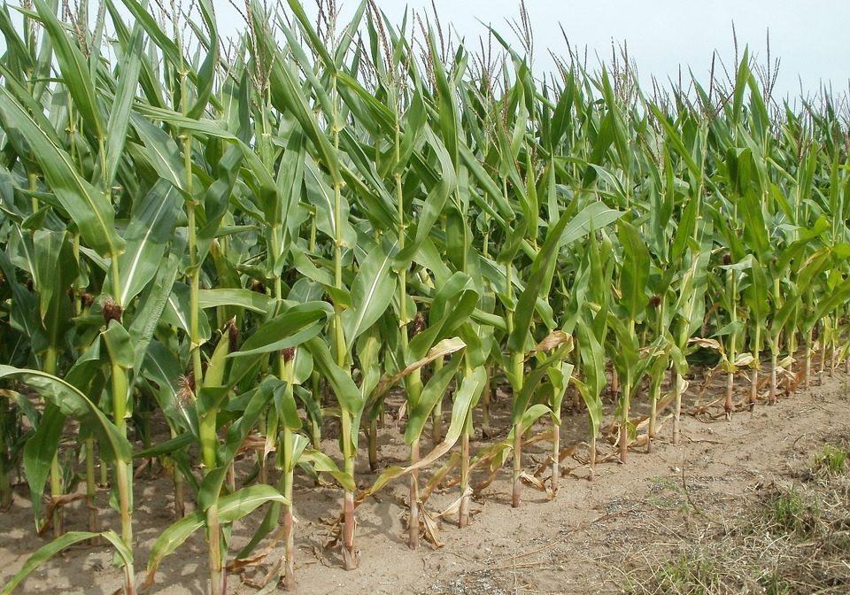 fertilizantes-agricolas
