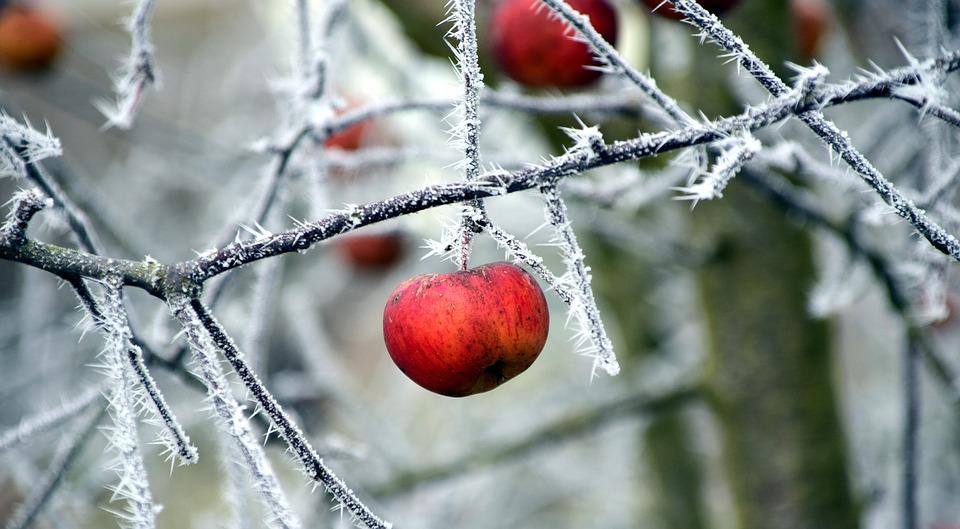 enfermedades-invierno-frutal