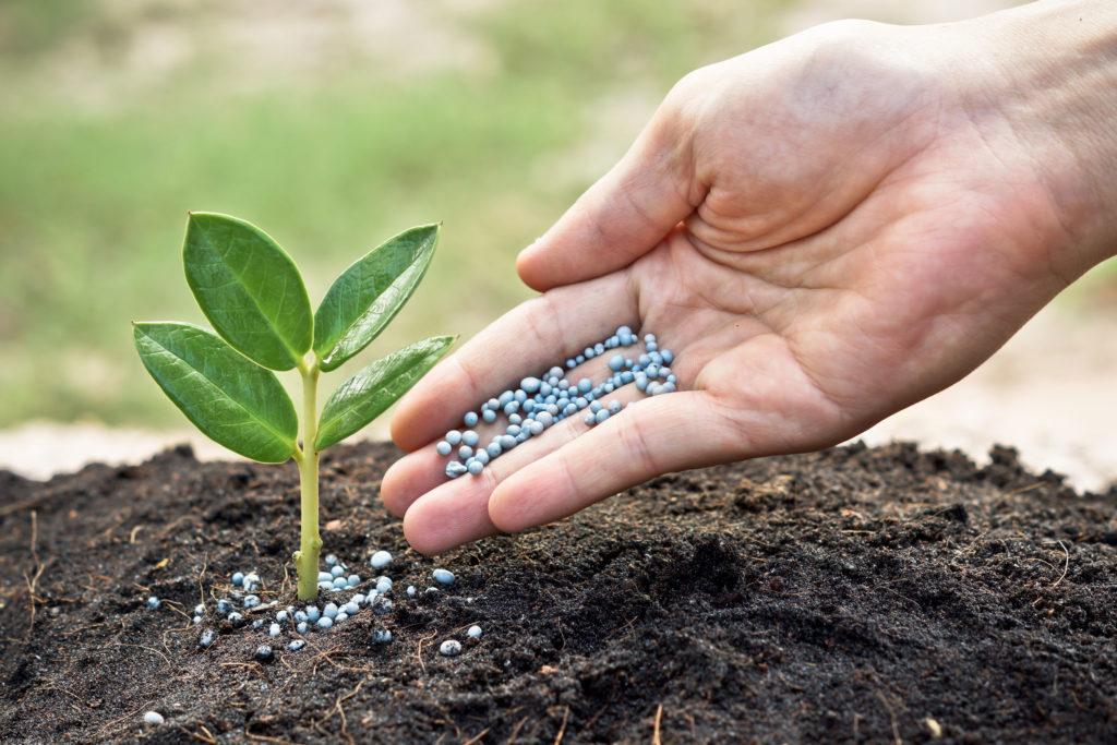 fertilizacion-nitrogenada-del-cereal