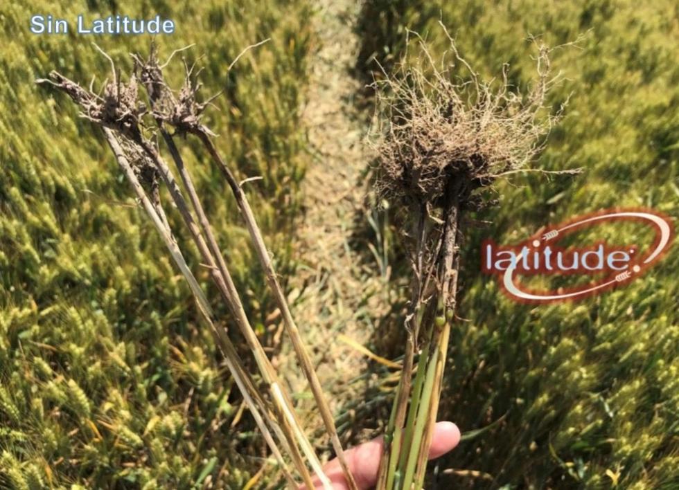 fungicida para plantas