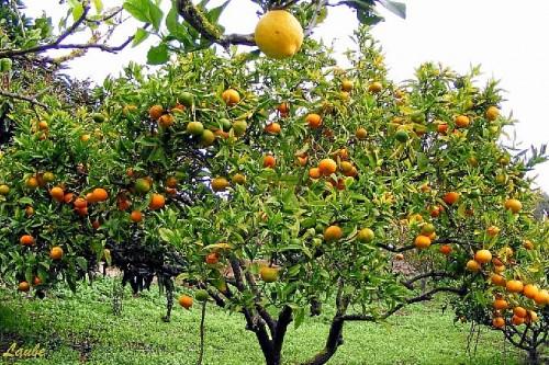 necesidades de frío invernal de los frutales