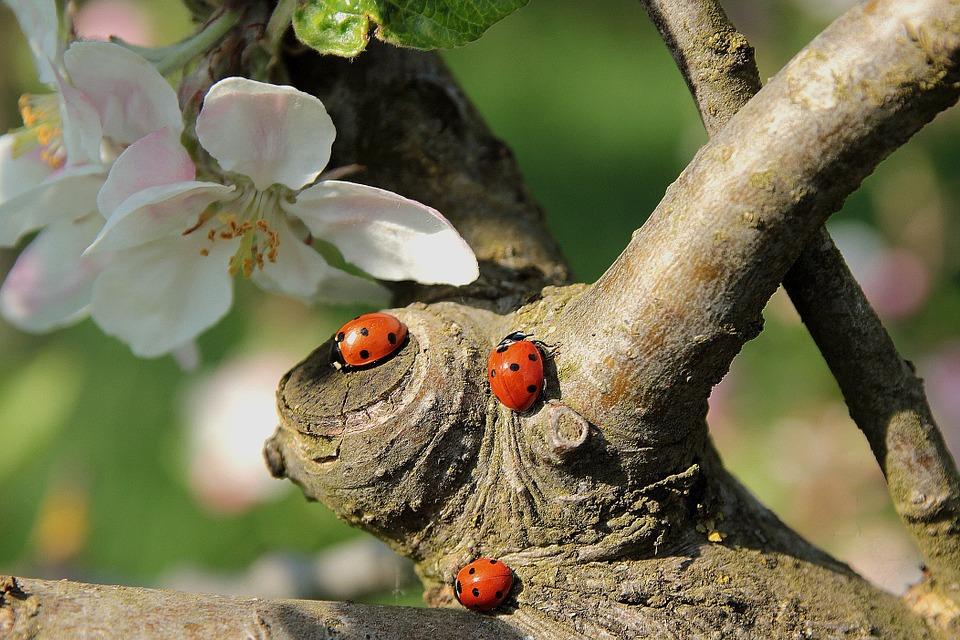 tratamiento-fitosanitario-blog